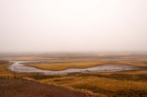 Yellowstone greeted us with a spooky fog laying heavily on the land.
