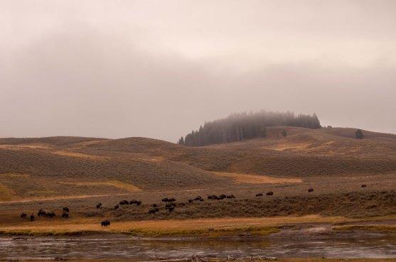Herd and hills