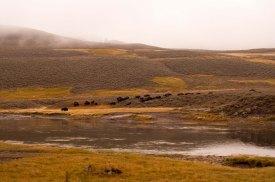 Herd creekside