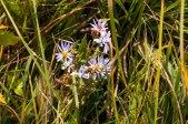 widflowers