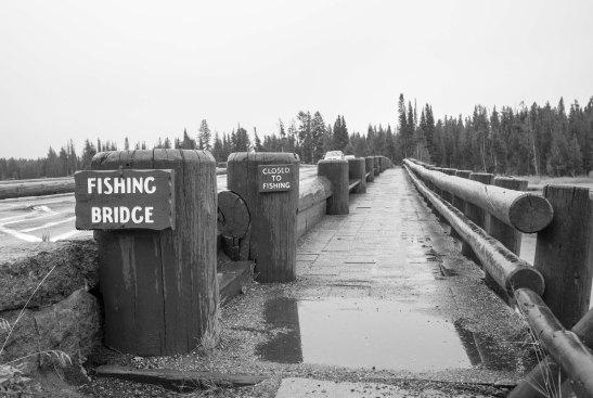 yellowstone no fishing bridge