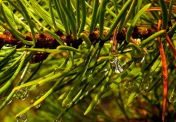 yellowstone raindrop
