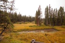 yellowstone river bank
