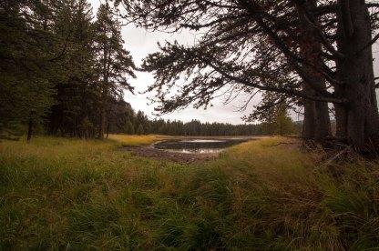 yellwostone grass lake
