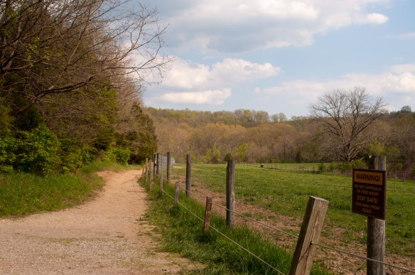 Once you get down the access road and follow the curve to the left, the trail runs along the side of the bison pen.